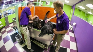 wagnwash-grooming